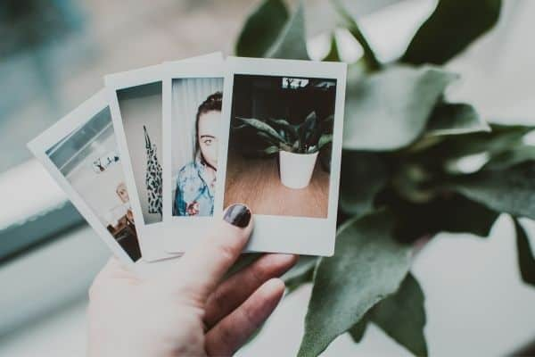 image of photo organization with 4 photographs in front of plant