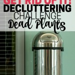 Do you have dead plants in your house. Today's the day to get rid of them! Part of the Get Rid of It! Decluttering Challenge.