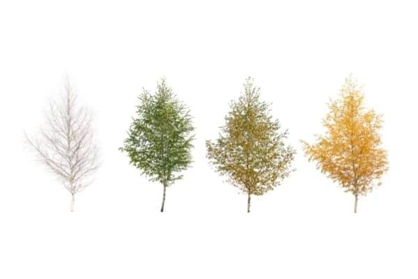 trees in all four seasons on white background